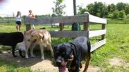 Residents split on proposed dog park in Oakland Mills