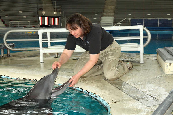 Sue Hunter, the National Aquarium's director of animal programs and marine mammals, checks a dolphin.