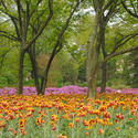 Jennifer Gilbert: Sherwood Gardens