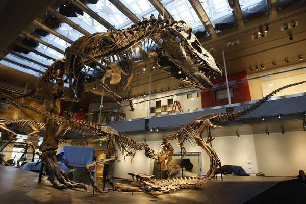 "Once a month the entire Natural History Museum stays open until 10 p.m. for an evening of live music concerts, tours and scientific discussions. This season's discussions will be moderated by Michael W. Quick, PhD. (Department of Biological Sciences and Executive <a class=""taxInlineTagLink"" id=""ENMV000158"" title=""Vice (movie)"" href=""/topic/entertainment/movies/vice-%28movie%29-ENMV000158.topic"">Vice</a> Provost, University of Southern California).<br> <br> Cost: For adults, museum and concert admission $18, museum admission only, $12<br> <br> Dates: First Friday of the month<br> <br> Contact info: 900 Exposition Blvd., Los Angeles; <a href=""http://tickets.nhm.org/WebStore/shop/ViewItems.aspx?CG=nhmonline&C=NHMFirstFridays"">http://tickets.nhm.org/WebStore/shop/ViewItems.aspx?CG=nhmonline&C=NHMFirstFridays</a><br> <br> Categories: Kids, Arts & Culture<br> <br> —J.H."