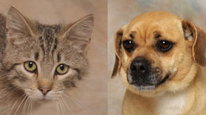 Danville-Boyle County Humane Society Pets of the Week for May 22