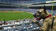 Dog Days at U.S. Cellular Field