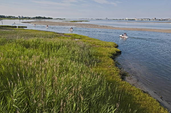 Survey finds Maryland coastal bays lost more than a third of their underwater grasses
