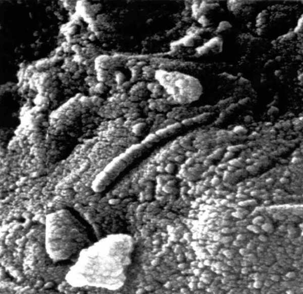 An electron-microscope photo of the famous Martian meteorite ALH 84001. A new analysis has shown that organic carbon in such Mars rocks did not come from biological sources.