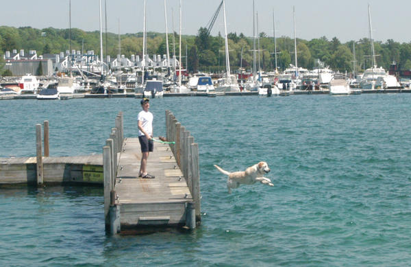 Jim Ryan, of Bloomfield Hills, plays fetch Thursday with his yellow Lab named Paddy while on a dock at the Harbor Springs marina.