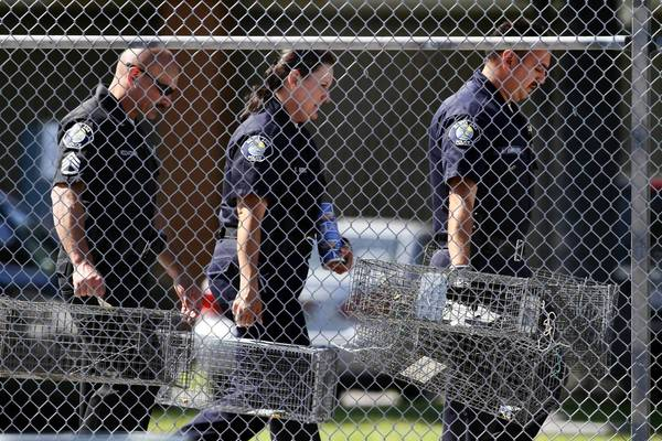 Santa Ana police animal services supervisor Sondra Berg, center, and other officers carry traps to be placed around Willard Intermediate School to capture feral cats that might have fleas infected with typhus.