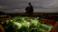 Bring farmworkers' plight into the sunlight