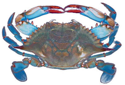 The blue crab has long been a part of the city of Hampton's legacy.