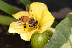 Honey bee colony losses were substantially down for the winter of 2011-2012.