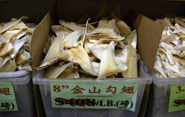 Illinois could become the first state without an ocean shore to ban the possession of shark fins. Supporters said Chicago's Chinatown is a hub for the sale and consumption of shark fin. Environmentalists said the measure is necessary to protect shark populations.