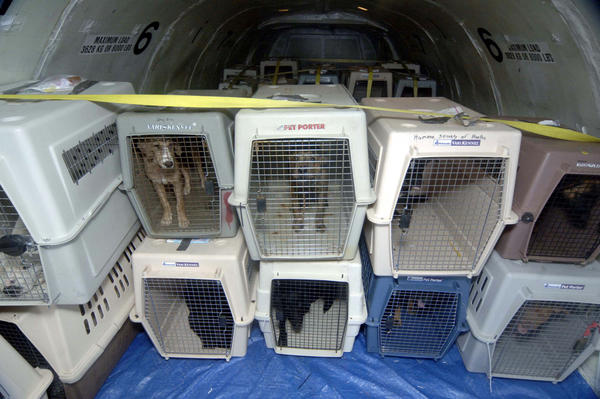 united airlines not allowing pets in passenger cabin