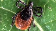 Area outdoors people have been reporting an uptick in, well, ticks this spring. But pinning the blame on a mild winter for an upswing in numbers may not be a catch-all answer anymore.