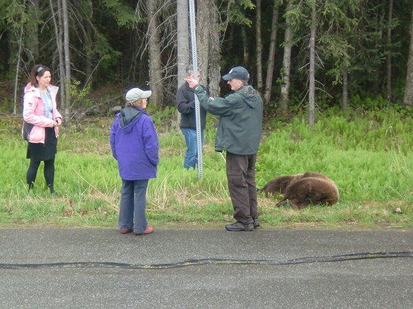 F&G officials put down brown bear in South Anchorage neighborhood.
