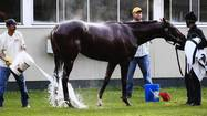I'll Have Another, the favorite for the Belmont Stakes with a shot to win horse racing's elusive Triple Crown, has been declared out of Saturday's race with tendonitis, his trainer said Friday morning.