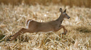 GFP ROUNDUP: Deer hunting changes possible for East River