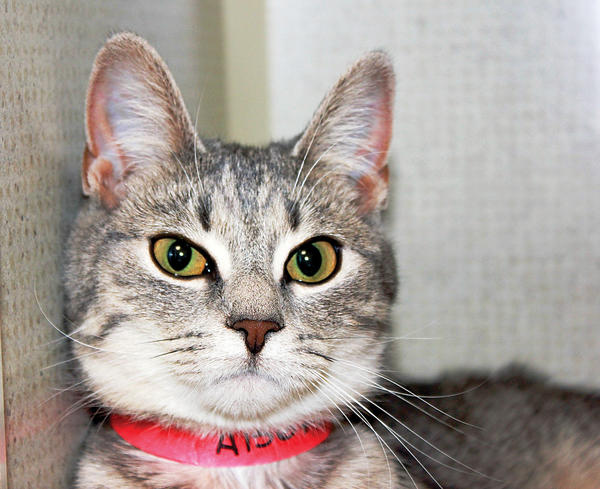 Sophie is available for adoption at the Humane Society of Washington County.