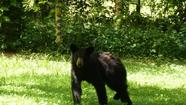 Black bear in Baltimore Co. spotted near elementary school
