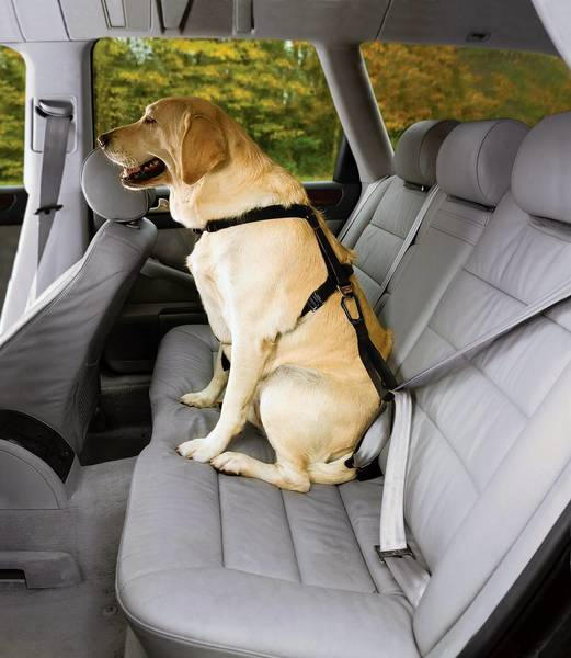 Safety harnesses for large dogs are made by TruFit and other manufacturers.
