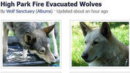 Some wolves have been evacuated from wildfire