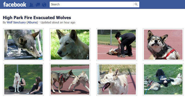 Wolves from the northern Colorado Wolf Sanctuary that were evacuated are shown on the center's Facebook page.