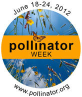 Plant for bees during Pollinator Week June 18-24.