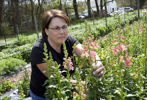 Flower farmer Lisa Ziegler checks on early-season snapdragons.