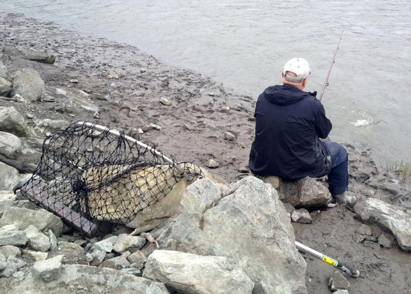 Kirby Brown spent Friday morning fishing on Ship Creek, where there are no emergency orders or closures in effect. Other rivers in Alaska are experiencing yet another summer of very low king salmon runs. Interest in Ship Creek, where fish come from a hatchery, might pick up as a result.