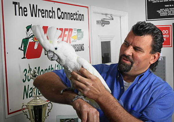Rick Eakins, the owner of Wrench Connection holds his pet cockatoo Coconut at his business in Orlando, Fla. on Thursday, June 14, 2012.
