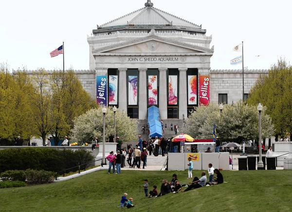 The Shedd Aquarium is offering free general admission to Illinois residents this week and discounted admission charges to some exhibits.