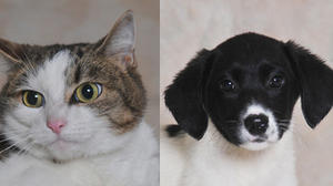 Danville-Boyle County Humane Society Pets of the week for June 19