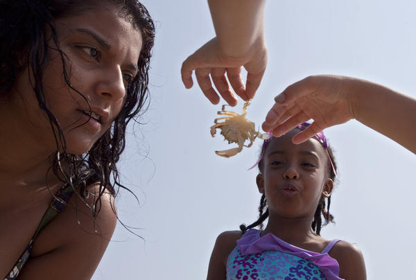 Alea Goldberg and Jada Hudson admire a crab found on the beach at Fort Monroe on Tuesday, June 19.