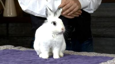 Pet of the Week: Jackson from the Rabbit Advocates