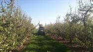 For the most part, the 2012 growing season for fruit farmers in Michigan has been a nightmare.