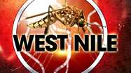 Officials in Dallas, Tarrant, Denton and Collin counties say human cases of West Nile virus are present. They also say batches of disease-carrying mosquitoes tested positive in areas across North Texas.