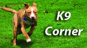 K9 CORNER: Dog with hearing loss can be a great companion