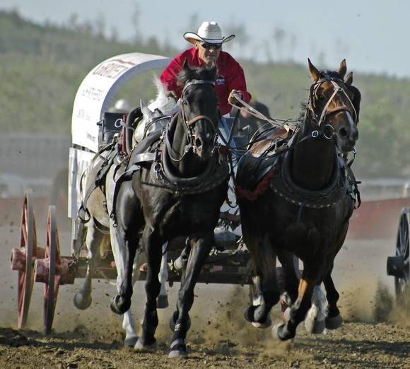 Chuckwagon racing at the Calgary Stampede