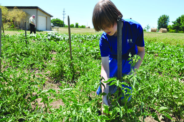 Matthew Schochler, 11, tends to the Heritage Baptist Church community garden Tuesday. Nearly all of the church's 100 members have contributed their efforts to help produce the garden.