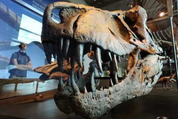 T. rex skull at Los Angeles Natural History Museum