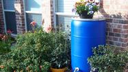 A rain barrel captures water that's good for potted plants.