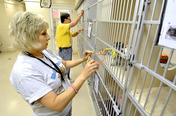Denise and Stan Bryan volunteer at The Humane Society of Washington County, foster cats at their Hagerstown home and raise awareness and funding for the shelter.