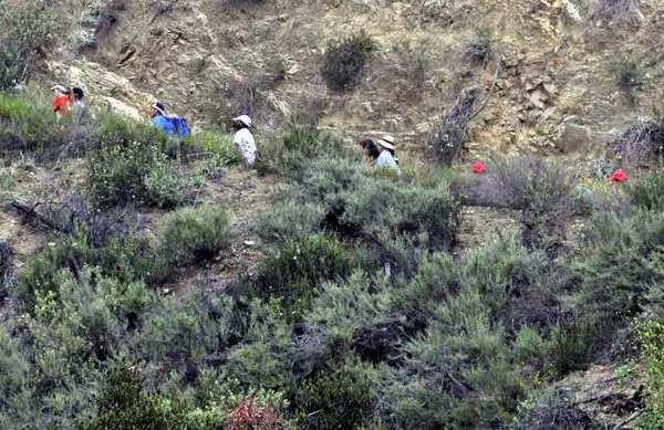 Glendale is seeking volunteers to cover the Verdugo Mountains, San Rafael Hills and Deukmejian Wilderness Park.
