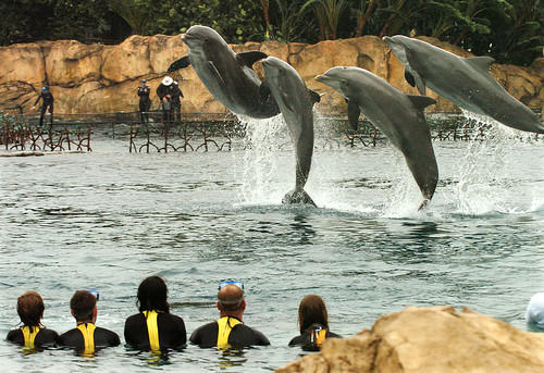 Guests interact with dolphins at SeaWorld Orlando's Discovery Cove.