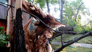 Pictures: Northwest Baltimore storm damage