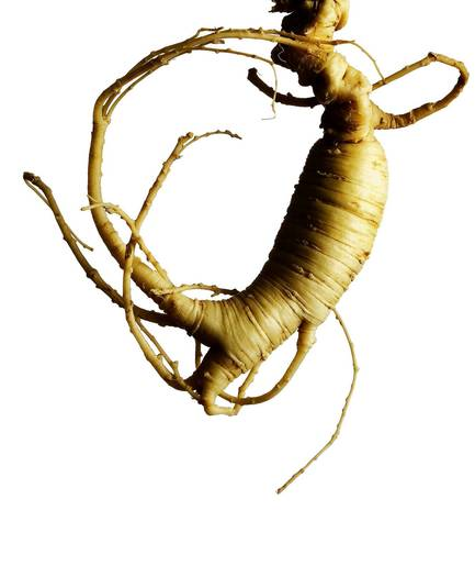 Mayo Clinic researchers found that American ginseng may help reduce symptoms of fatigue for cancer patients undergoing chemotherapy or radiation.