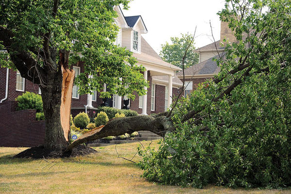 A section of a large tree was downed in front of a home on Colby Road during one of the wind storms that swept through Clark County. Strong winds Friday, Saturday and Sunday evenings felled trees throughout the county, keeping road crews busy.