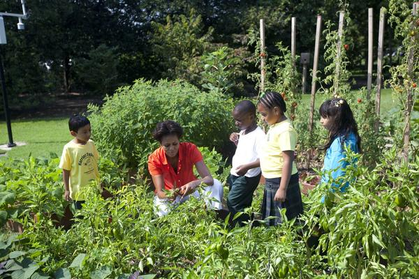 First Lady Michelle Obama's garden at the White House has become popular with schoolchildren and tour groups. Some of the harvest helps feed the homeless.