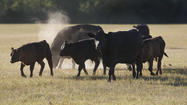 Drought has potential three-year 'tail' on beef production