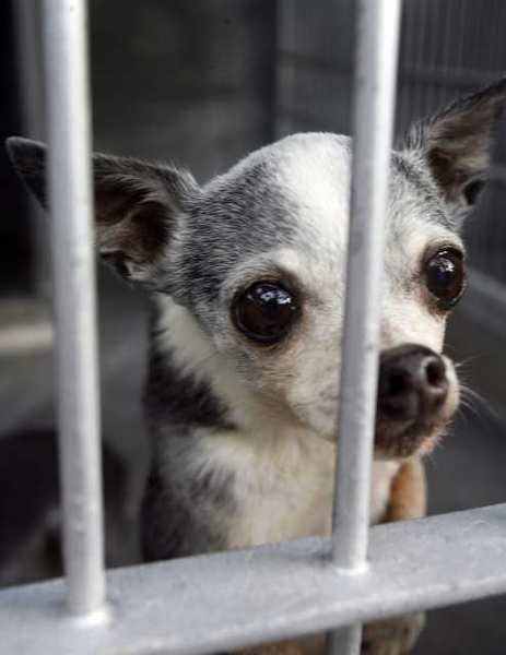 Glendale's retail ban on the sale of cats and dogs will start in September.
