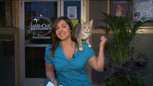 Cat Climbs On FOX 17 Reporter On The Air