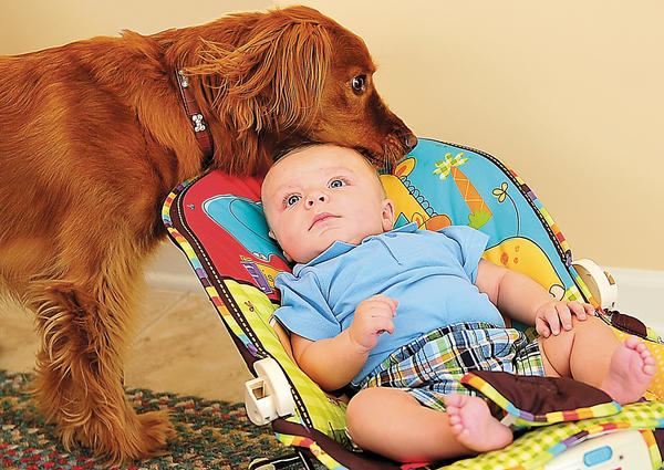 The Humane Society of the United States recommends that when adding a baby to your pet-owning family, encourage friends with infants to visit your home to accustom your pet to babies. Supervise all pet and infant interactions.